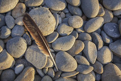 Seagull Feather on Ruby Beach Royalty Free Stock Images