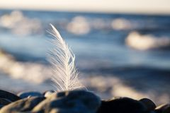 Seagull feather stuck in a rock at the seaside Stock Images