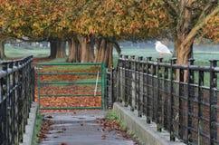 Seagull on fence in autumn scene Stock Photo