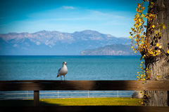 Seagull on a fence Stock Images