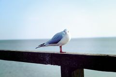 Seagull on fence by sea Stock Image