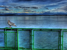 Seagull on the ferry Royalty Free Stock Photo