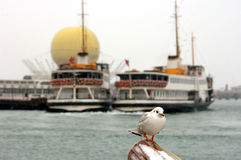 Seagull and ferryboats Stock Image