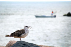 Seagull and fisherman. A seagull surveys the ocean as a fisherman casts his crab nets royalty free stock image