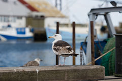 Seagull and fishing boat Stock Images