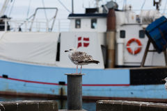 Seagull and fishing boat Stock Photography