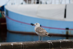 Seagull and fishing boat Royalty Free Stock Photos