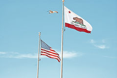 The seagull and the flags. A seagull overflying the american and californian flags Royalty Free Stock Images
