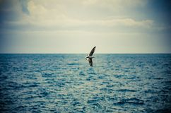 Seagull flies free in colors stock photo