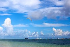 Seagull flies high in beautiful bright blue sky  above the sea with ships and boats stock image