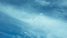 The freedom to be able to fly. The Seagull flies high in the expressive blue sky dotted with feathery clouds Stock Photography