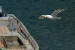 Seagull flies over Black Sea near the coast of Crimea Stock Photo
