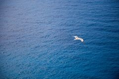 Seagull flies over the blue sea royalty free stock photos