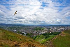 Seagull flies over Edinburgh city view - from Arthur Seat royalty free illustration