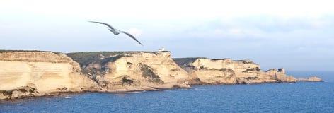 A seagull flies over the limestone white cliffs of Bonifacio. Corsica Royalty Free Stock Photo
