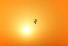 Seagull flies over the port Stock Photography