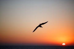 Seagull flies over the surface of sea at sunset Stock Photo
