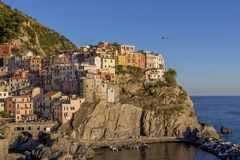 Seagull flies over the village of Manarola just before sunset, Cinque terre, Liguria, Italy. Europe royalty free stock photography