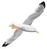 Seagull in flight. White gull or seagull in flight. Vector illustration on white background Stock Photo