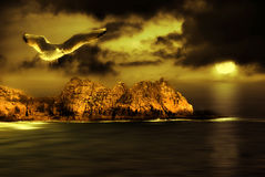 Seagull flight Royalty Free Stock Images