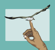 Seagull in flight. On the fingers of the hand Stock Image