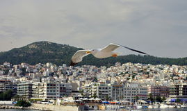 Seagull flying and port city Kavala in background, landmark attraction in Greece Stock Photography