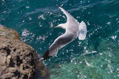Seagull flight over the sea royalty free stock image