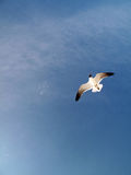 Seagull in Flight. A serene coastal view of the blue sky and a seagull in flight Stock Photo