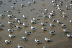 Seagull flock. Stand on the shore Stock Photo