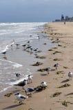 Seagull flock on beach stock photo