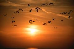 Seagull flock on sunset sky stock photography