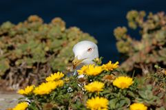 Seagull in flowers stock images