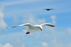 Seagull fly above the sea Royalty Free Stock Photography