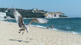 Seagull on the beach, black sea stock image