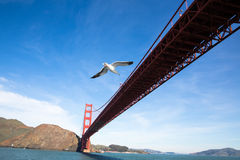 Seagull fly with gold gate Royalty Free Stock Photos