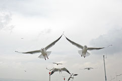 Seagull fly over lake dianchi Royalty Free Stock Photo