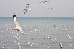 Seagull flying. On sea background image Stock Photography