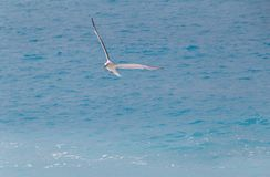 Seagull flying above azure sea. In Nice, France stock photo
