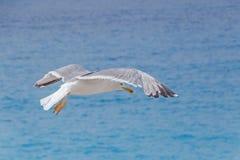 Seagull flying above sea. Seagull flying above azure sea royalty free stock photos