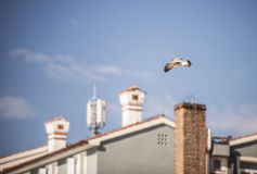 Seagull flying above some houses. And looking for food Royalty Free Stock Photography