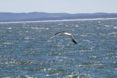 Seagull flying acroos the sea at Casa Pueblo, Punta del Este stock photos
