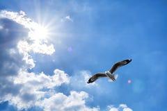 Seagull flying against blue cloudy sky with brilliant sun Stock Photos