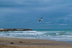 Seagull flying against blue dramatic cloudy sky stock photos