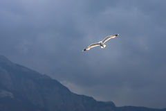 Seagull flying against a cloudy sky Royalty Free Stock Images