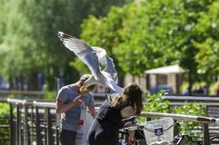 Seagull flying away with white bread in its mouth royalty free stock image