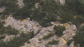 Seagull flying on the background of rocks and trees. stock footage
