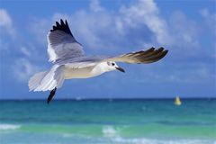 Seagulls on Beach in Playa del Carmen, Mexico Stock Images
