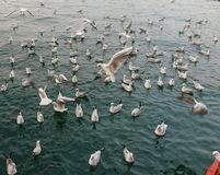 Seagull flying on blue sea. Beautiful view of seagulls flying on sea royalty free stock image