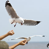 Seagull flying on cloudy sky. Focus at hand Stock Photo
