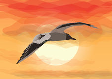 Seagull flying in front of the rising sun Royalty Free Stock Images